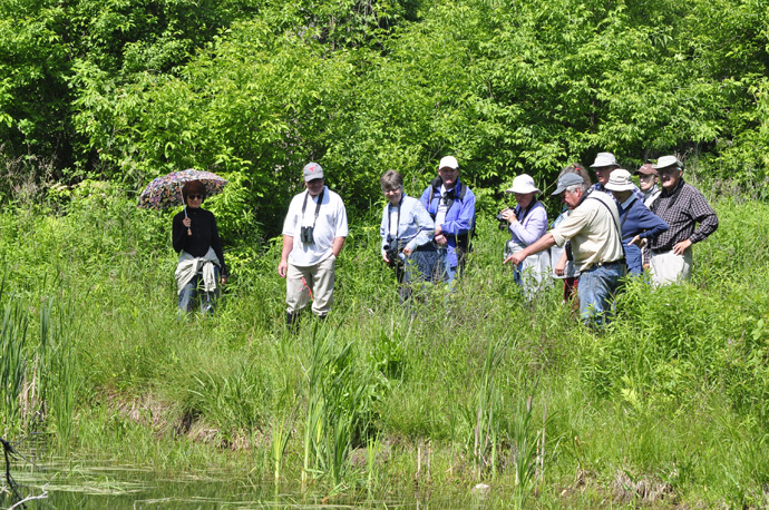 Members observe dragonflies beside the creek and weir (Braham Tract, Jun 11, 2016). (credit: Dalila Seckar)